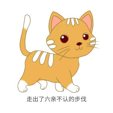 sb搞笑表情头像比基兔猫咪表情包图片