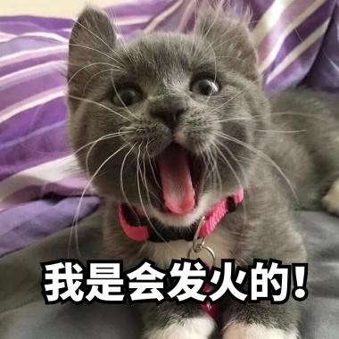搞笑小肥猫生气发火表情表情包字带可爱李白图片