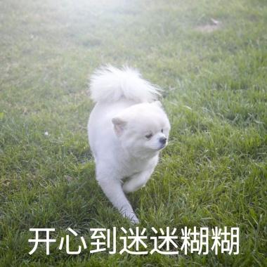 柴犬狗狗饿了逗比恶搞趣味表情手机早上睡不醒的搞笑图片图片