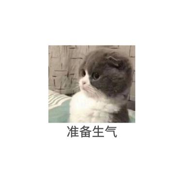 图片卡通发疯生气表情负荆请罪猫咪包表情图片