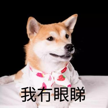 柴犬狗狗饿了逗比恶搞趣味女生表情的手机高冷表情包图图片