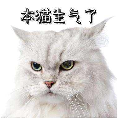 sb搞笑小可猫咪表情包爱你表情真是图片