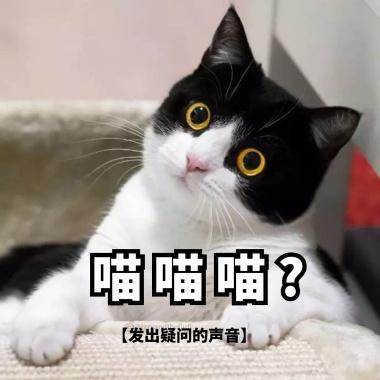 萌物猫我们一起喵喵喵表情萌表情包猫+gif图片