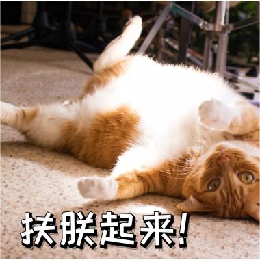 退下朕要睡觉了表情打哈欠休息搞笑猫咪快表现时间的搞笑图片图片