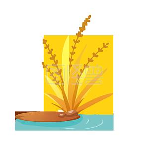 芒种节气稻谷植物素材