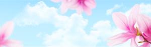 美容banner背景素材