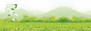 茉莉花茶清新背景banner