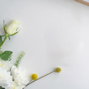 清新白玫瑰背景图