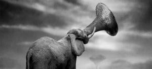 保护动物公益背景