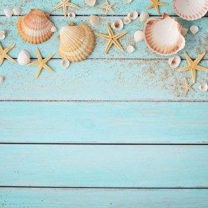 蓝色木板贝壳背景图