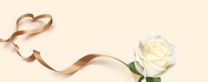 金色质感丝带白玫瑰背景
