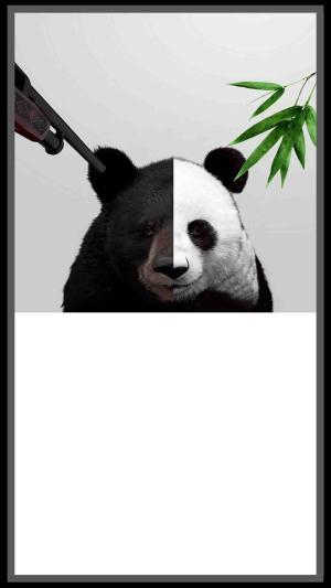 灰色熊猫保护动物公益背景