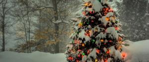 森林白雪圣诞树背景
