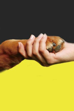 保护动物公益宣传海报背景
