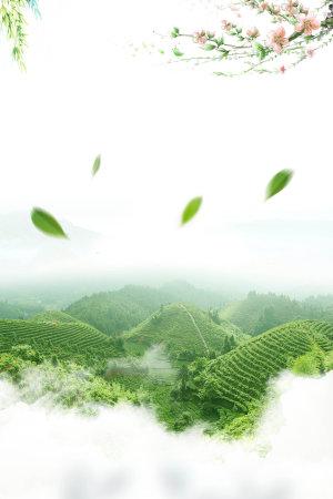 绿色茶叶背景素材