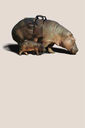 简约文化保护动物公益海报背景模板