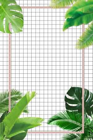 绿植ins风广告背景图