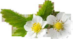 绿植花卉抽象花朵图片  清新白色小花