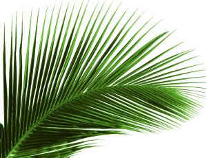 绿色植物芭蕉叶树叶