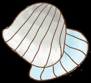 卡通手绘贝壳