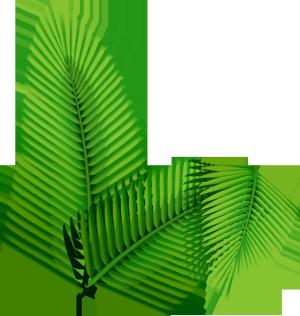 绿色热带芭蕉叶扁平装饰