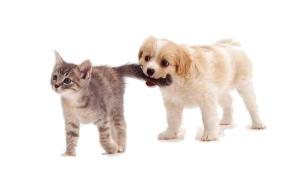 狗咬猫尾巴