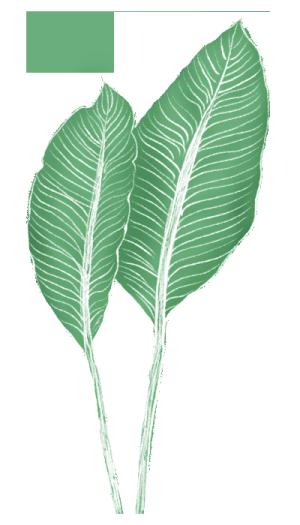 手绘芭蕉树叶