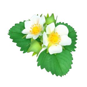 清新薄荷叶花卉