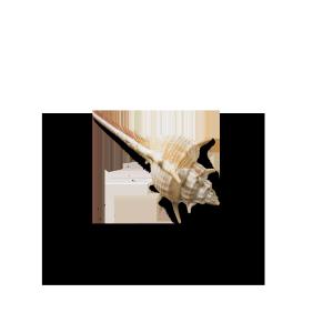 海洋贝壳海螺