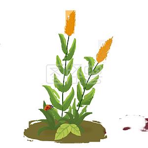 芦苇和七星瓢虫手绘