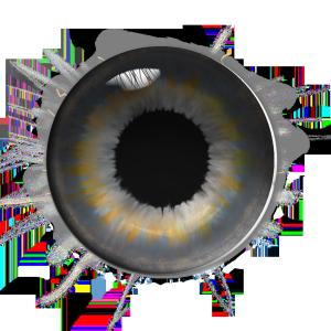 PS制作棕色眼睛瞳孔