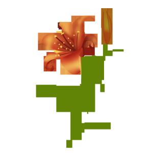 手绘水彩百合花植物花卉红百合