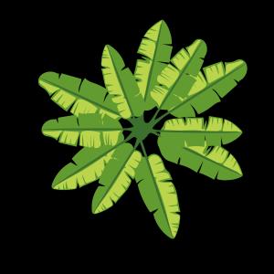 绿色芭蕉叶PNG