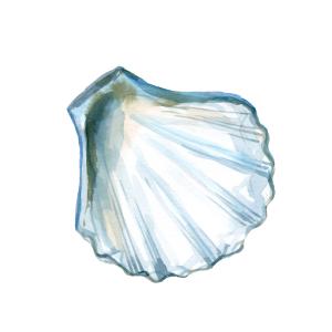 蓝色水彩沙滩贝壳