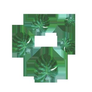 手绘热带植物绿叶