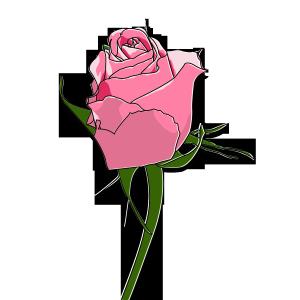 红色粉色玫瑰花情人节礼物520浪漫七夕我爱你