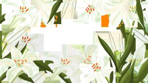 百合花装饰边框设计