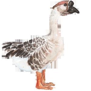 水墨白色羽毛鸭子